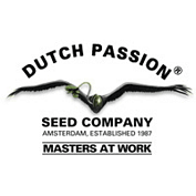 Dutch Passion - Semi Femminizzati