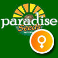 Paradise Seeds - Feminised