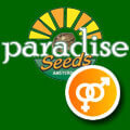Paradise Seeds - Regular