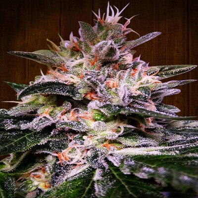 Bubba Hash Feminised Seeds