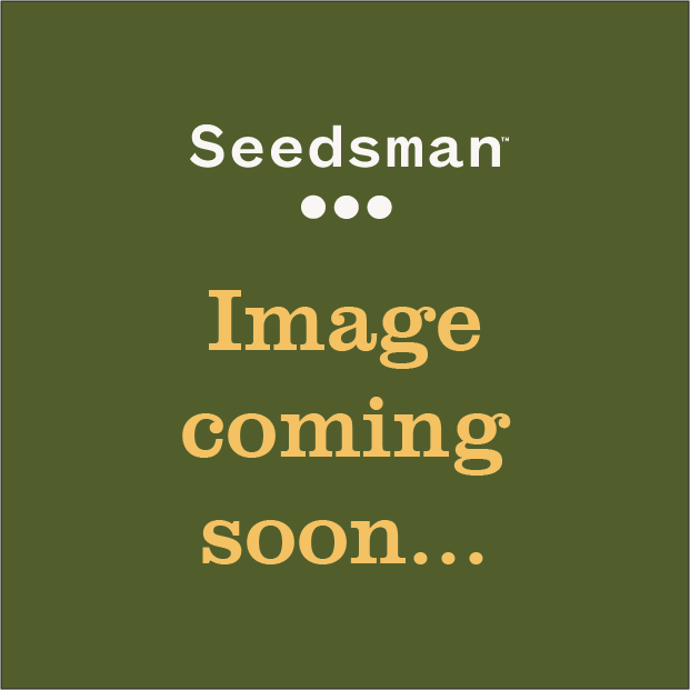 London Connections Red Organic Cotton T-Shirt