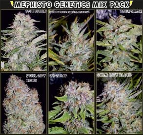 Mystery Mix Pack Auto Feminised Seeds