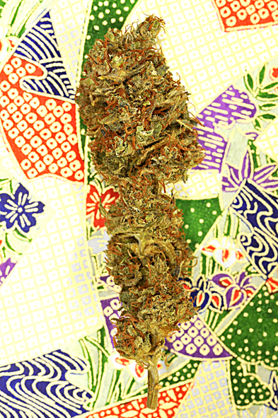 Southern Lights #7 FEMINISED Seeds - 5
